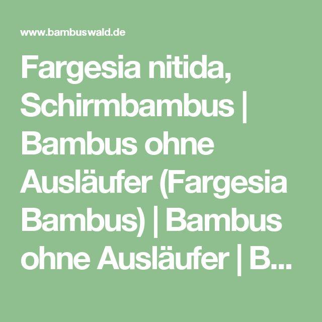 Fargesia nitida, Schirmbambus | Bambus ohne Ausläufer (Fargesia Bambus) | Bambus ohne Ausläufer | Bambus und Pflanzenshop