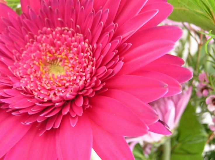 Pink Flowers | This is the rocking bright pink flowers pretty Wallpaper, Background ...