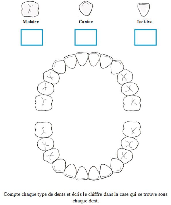 Different teeth and uses_french