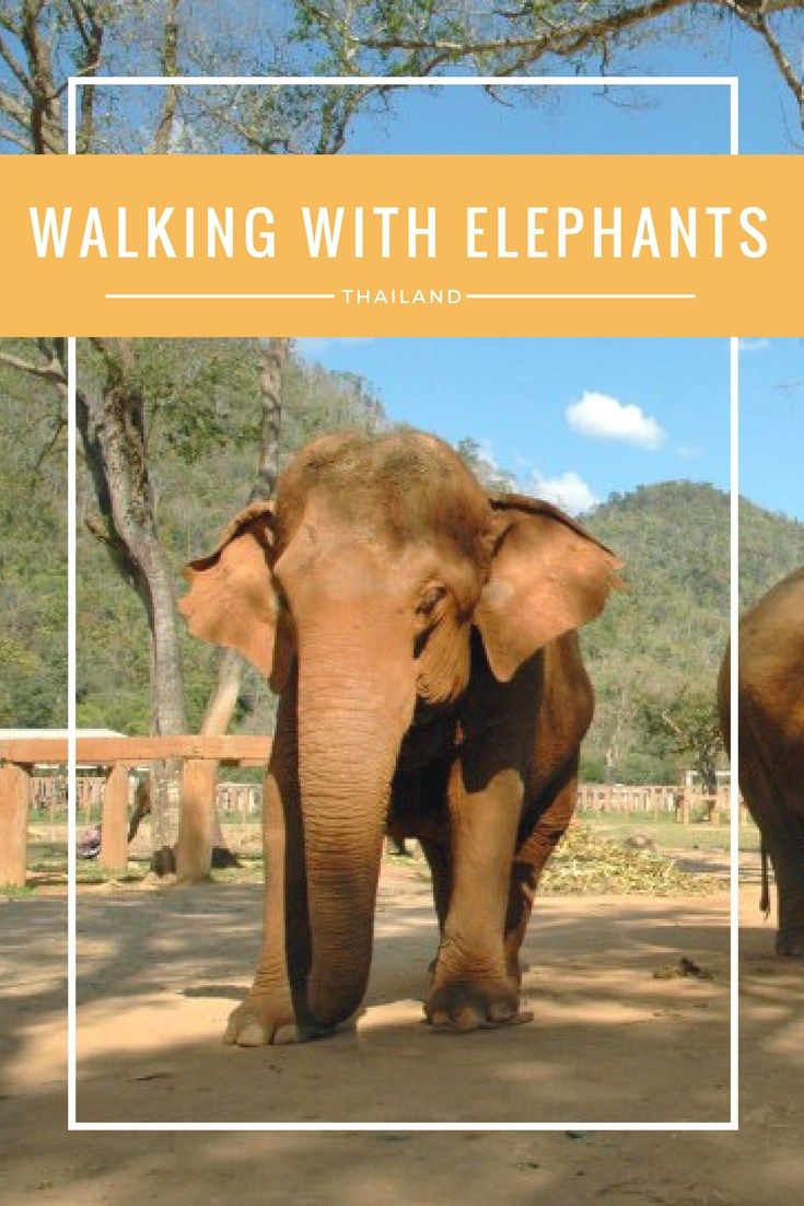 Walking with Elephants at Elephant Nature Park in Chiang Mai Thailand