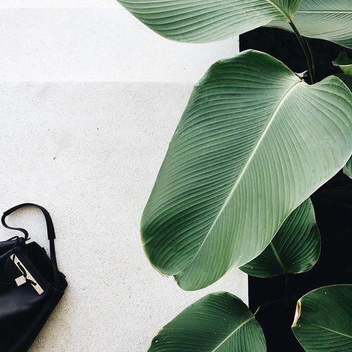 477 besten botanical bilder auf pinterest zimmerpflanzen g rtnern und sukkulenten - Zimmerpflanzen groay ...