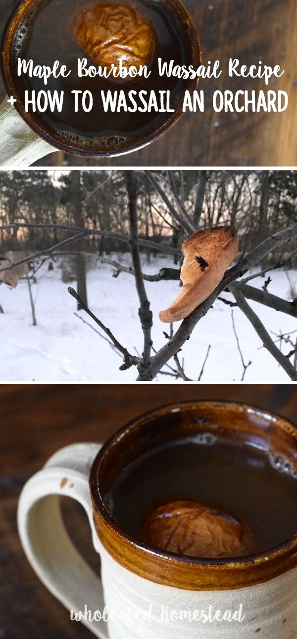 Wassailing- you did what?! My simple MAPLE BOURBON WASSAIL recipe, plus the story of how (and why) we Wassailed our apple orchard!