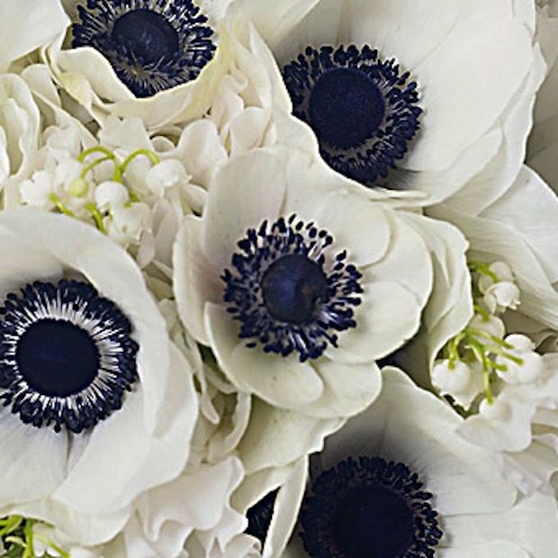 Himalayan Blue Poppy Bouquet 31 best Himalayan Blue...