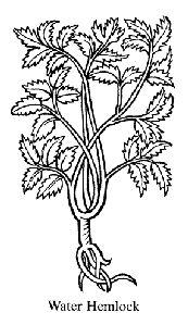 shamanism herbalism