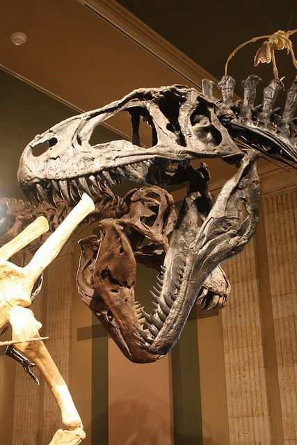 Acrocanthosaurus at the Kenosha Dinosaur Discovery Museum | Flickr - Photo Sharing!