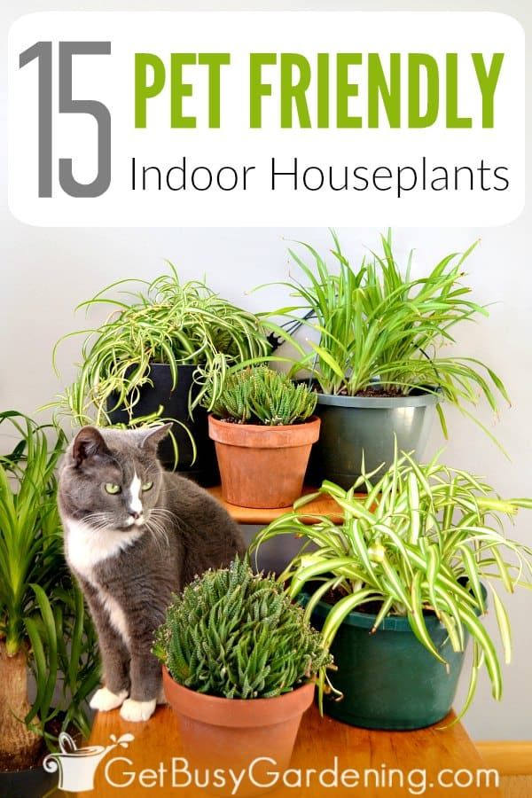 15 Indoor Plants That Are Safe For Cats And Dogs In 2020 Plants Pet Friendly Dog Safe Plants Houseplants Safe For Cats