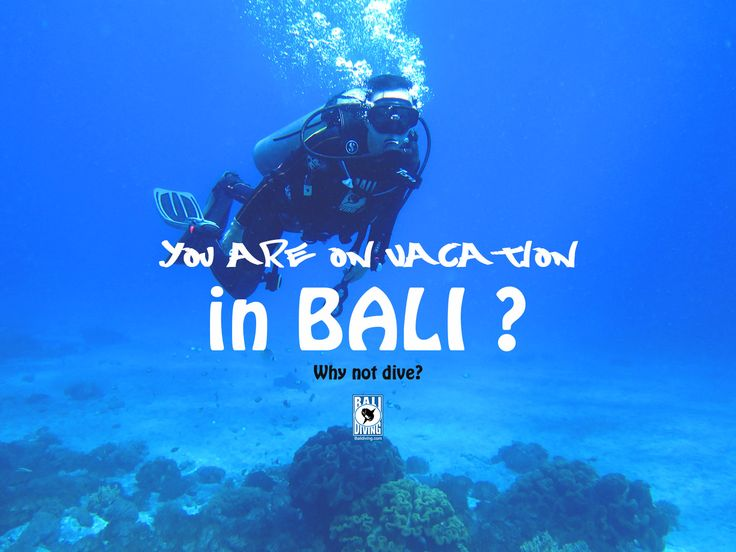Only US$115 (Boat dive)  Price include all.