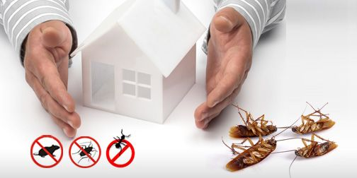 Our preventive measures for pests are completely harmless, and we utilize the best chemicals available in the market to assure you complete 100% satisfaction.