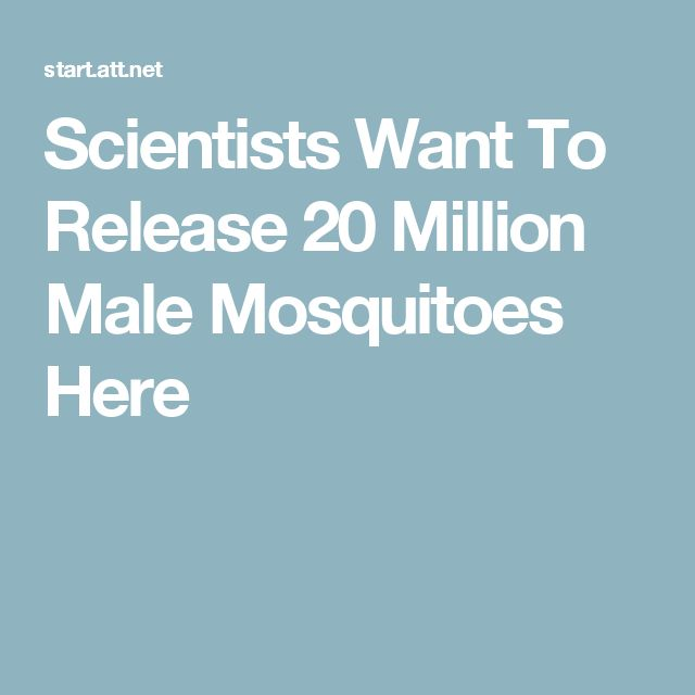 Scientists Want To Release 20 Million Male Mosquitoes Here