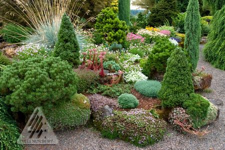 Assorted containers and troughs mix well in the conifer garden.