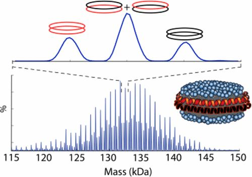 Engineering Nanodisc Scaffold Proteins for Native Mass Spectrometry