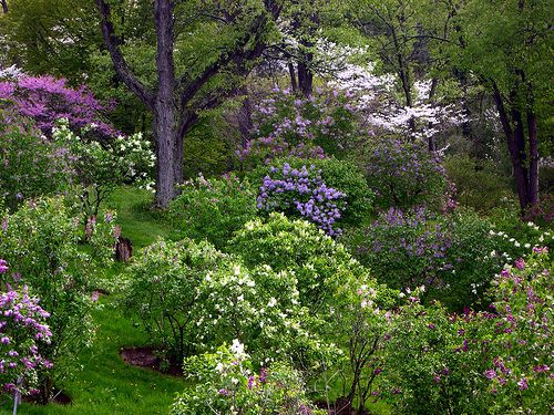 Royal Botanical Gardens, Hamilton, Ontario when the Lilacs are in bloom (photo by Stephen Downes)