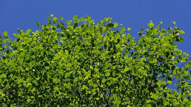 Kesän vihreyttä pitkän harmaan talven jälkeen.