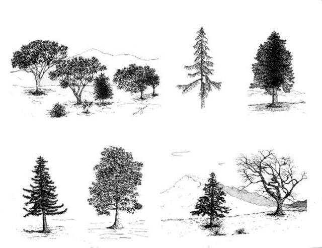 Architecture Drawing Trees 117 best sketch images on pinterest | architecture, drawing people