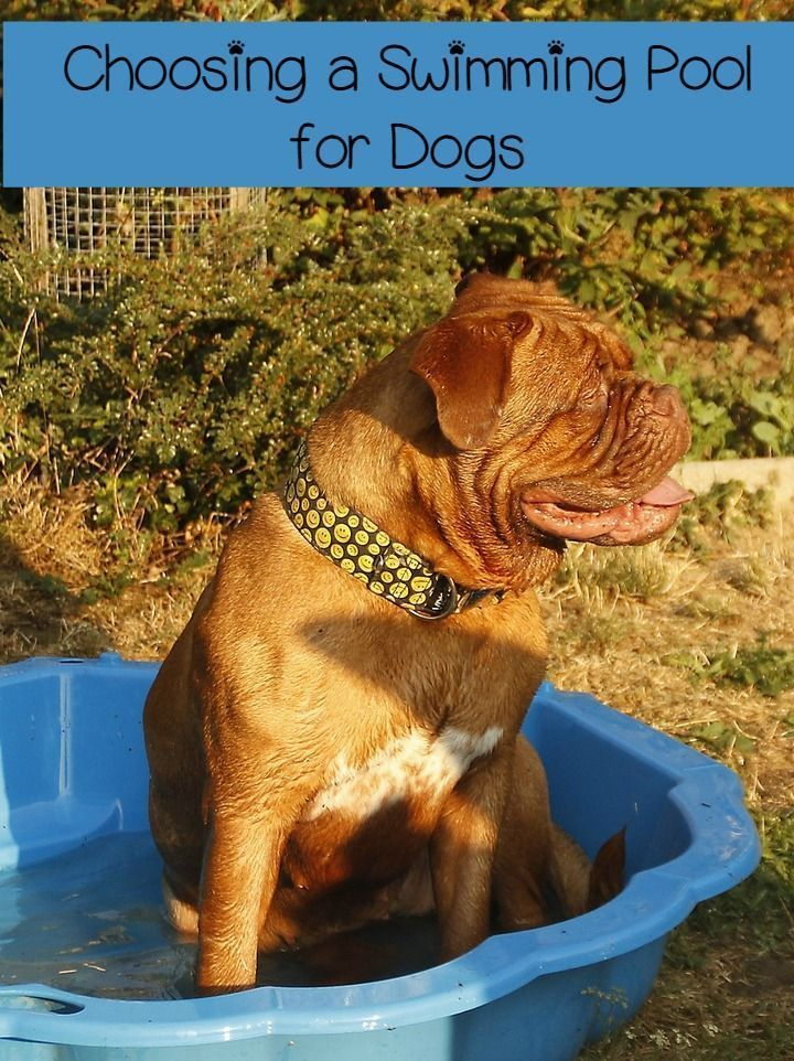 Thinking about getting a dog swimming pool? Check out the different options and pick the best for your budget & back yard!