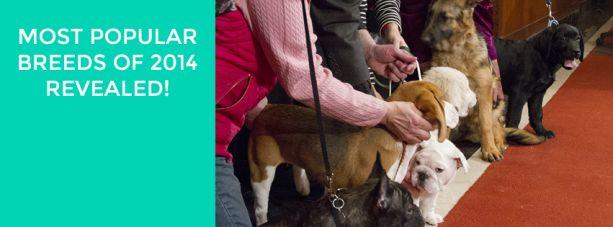 USA Top 10 Dog Breeds 2014