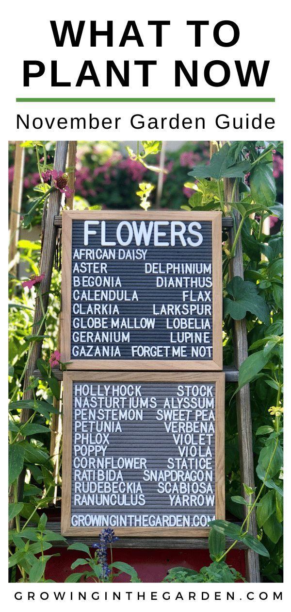 d29e935928027e4173bd0864122b62cd - Gardening In Arizona When To Plant
