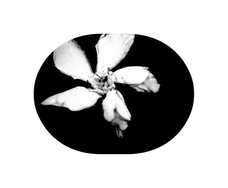 Manuel Vázquez nos envía esta fotografía de una flor que él mismo encontró en el suelo y después editó.