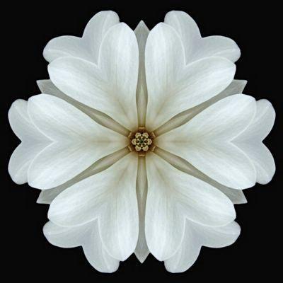 Flower Mandalas Project: Magnolia.  Tattoo idea...