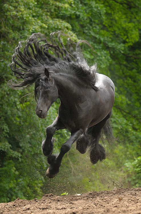 incredible power and beauty of black #horse