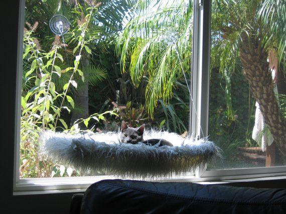 Kunstfell  neugierige Katzen Fenster Barsch