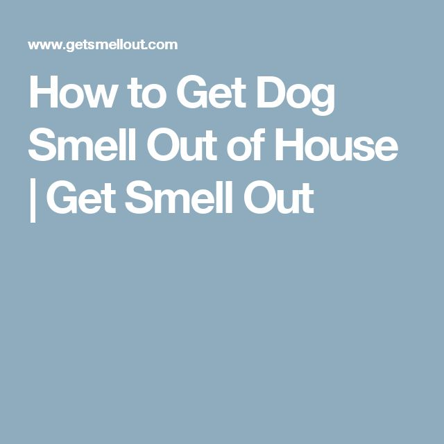 How to Get Dog Smell Out of House | Get Smell Out