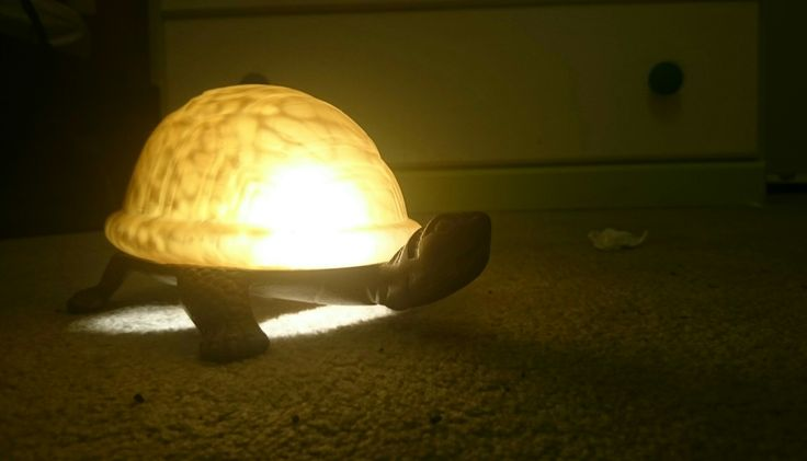 My Turtle Lamp. This photo is also a mystery to why I love it