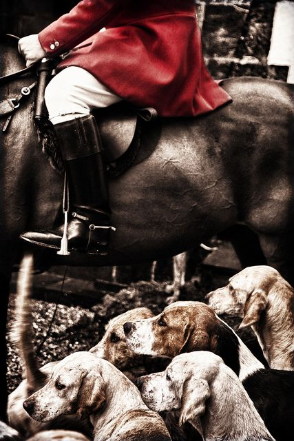 foxhunting. so awesome. loveee it.