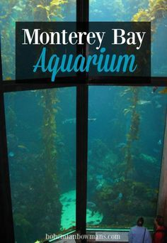 The Monterey Bay Aquarium is a must do in California. - Here are some insider tips on what to do and what NOT to do at the Aquarium.