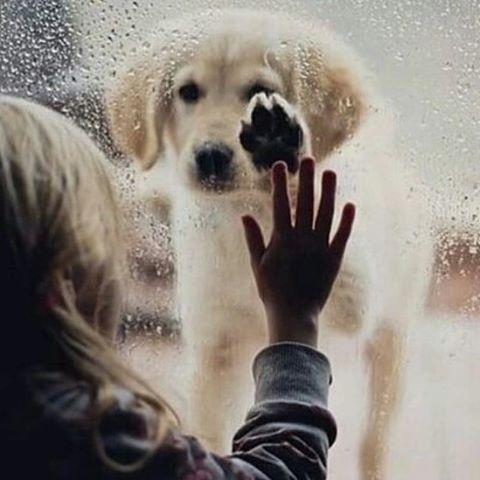 Esta fotografía representa para mi familia la prohibición de tener una mascota en casa, mis hijos tienen asma y el médico no permite que tengan contacto y con los perritos.