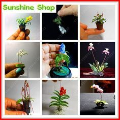 Rare 100 Pcs/bag Mix Mini Orchid Seeds phalaenopsis orchid Indoor Miniature garden bonsai flower seeds orchid Pot home garden plant by SunshinebyDung on Etsy