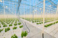 В Японії роботи самостійно будуть вирощувати салат https://www.depo.ua/ukr/life/v-yaponiyi-roboti-samostiyno-budut-viroschuvati-salat-20170621592813  Уже в цьому році почне роботу робоферма в Кіото, де без участі людей буде виростати ідеальна зелень