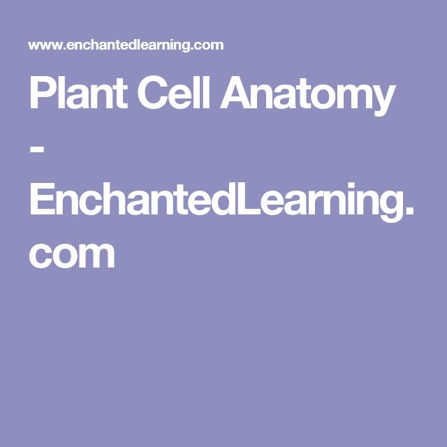 Plant Cell Anatomy - EnchantedLearning.com