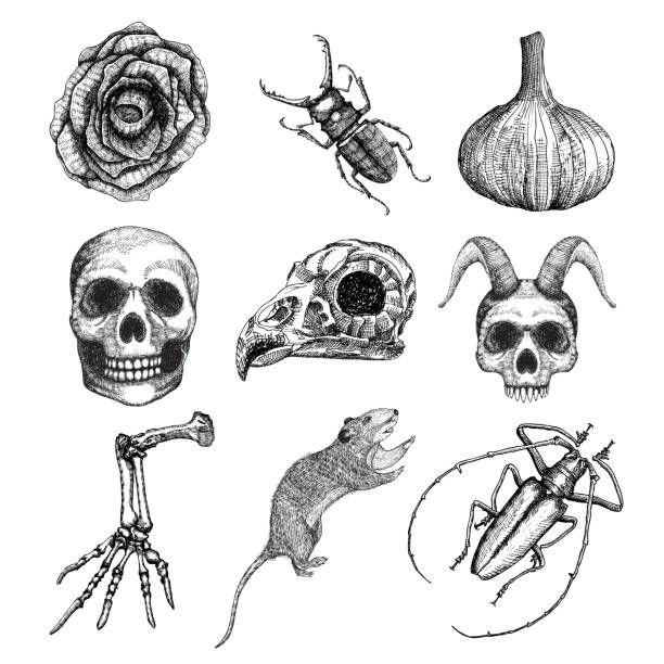 M 225 S De 25 Ideas Incre 237 Bles Sobre Tatuaje De Rata En
