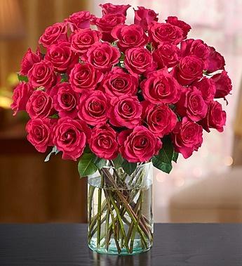 Blush Perfection Roses