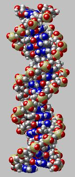 The Biology Project Biochemistry Graphic of DNA molecule