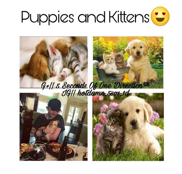 Puppies and kitten😍