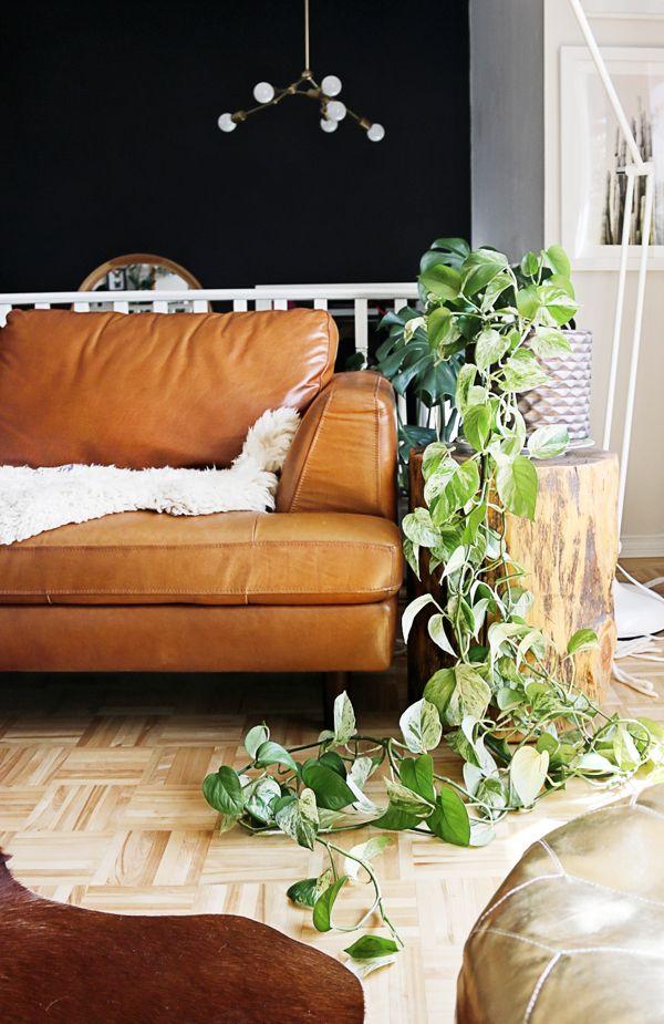 You Won T Kill These Ten Houseplants Best Low Light Houseplants In 2020 Indoor Plants Low Light Houseplants Low Light Houseplants