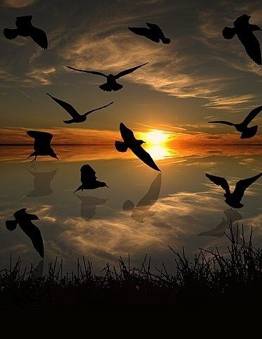 flock silhouette by sunset