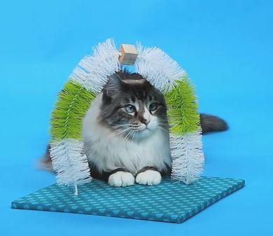 Sabe aquela massagem relaxante ao final do dia? Agora seu gatinho pode receber uma também! Ótima ideia, Friskies!