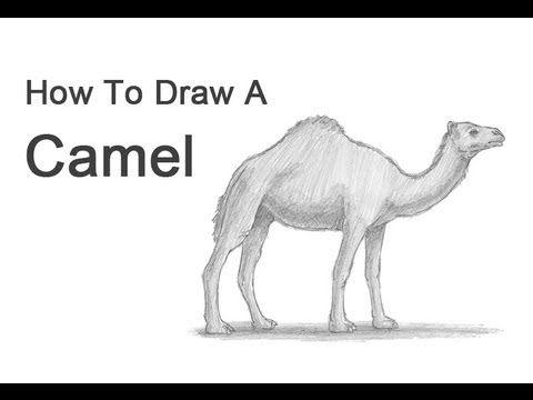 YouTube filmpje van hoe je een kameel kan tekenen (ben overgestapt naar kameel)