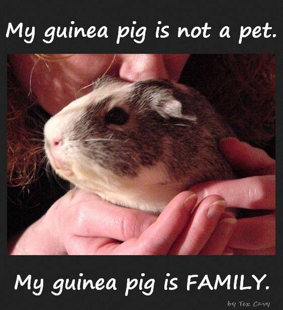 Pets are more than pets, they are family!