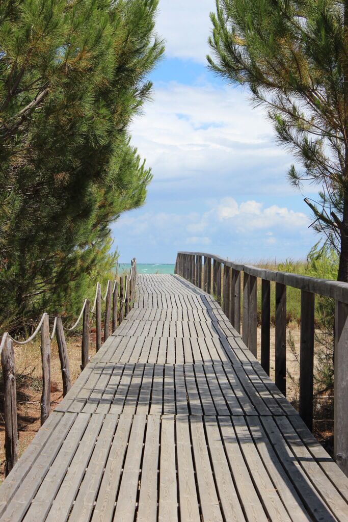 A pine tree-lined path leads to this unspoiled stretch of Adriatic coastline in Molise, Italy.