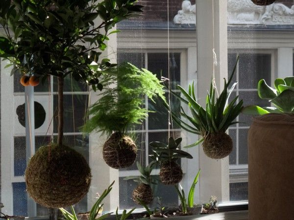 hanging-plants-by-string-gardens-01