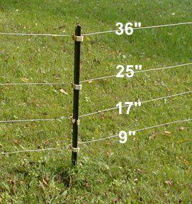 Hog Wire Dog Fence