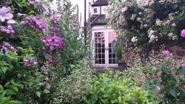 Pretty shrubs in rear garden of Somerset town house