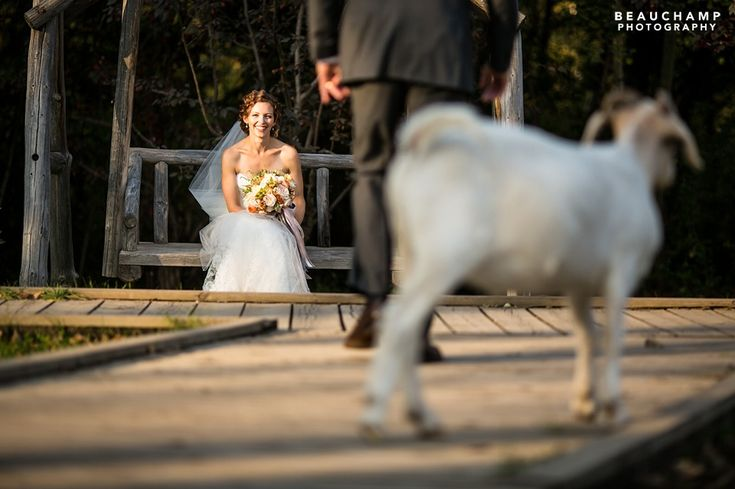 There always seems to be animals on the loose at Fort Edmonton Park. Perhaps they just like being in wedding photos! See more images from this wedding by Beauchamp Photography at: http://beauchampphotography.ca/weddings/laura-mike-2/