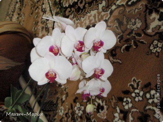 Мастер-класс Флористика искусственная Моделирование конструирование Орхидея мини МК Фоамиран фом фото 8