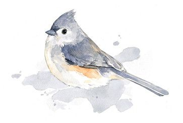 Tufted Titmouse bird watercolor traditional-prints-and-posters