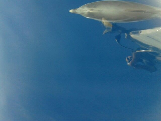 Dead calm water and dolphins